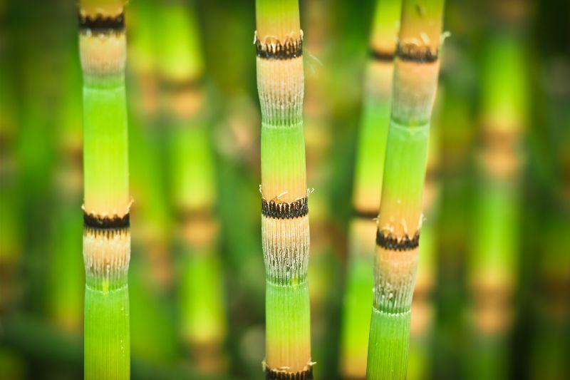 Bamb caracter sticas propiedades descripci n planta - Tipos de bambu ...