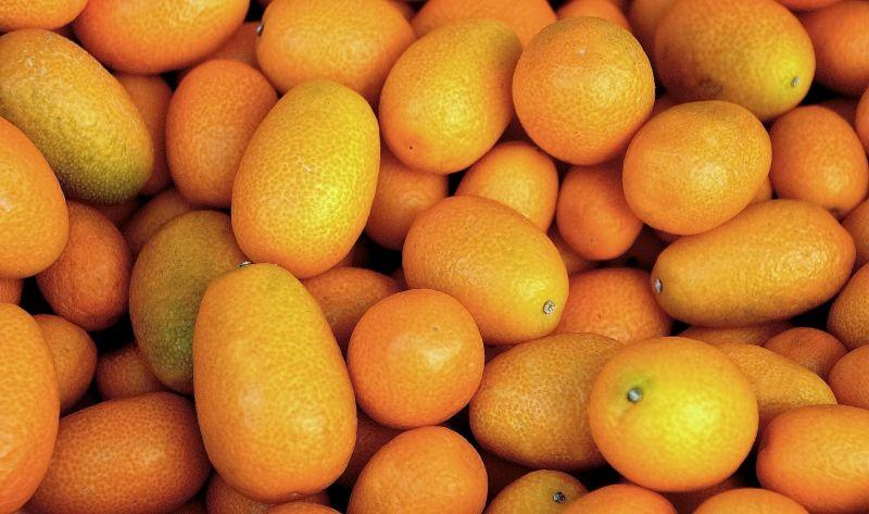 Kumquat, características, origen, cultivo, reproducción, cuidados Árbol