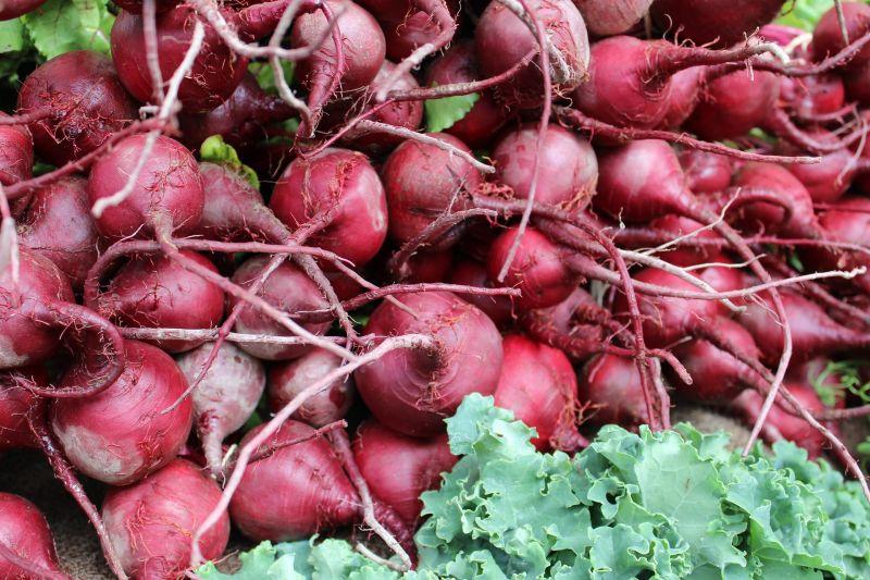 Remolacha, características, cultivo, siembra, beneficios, propiedades