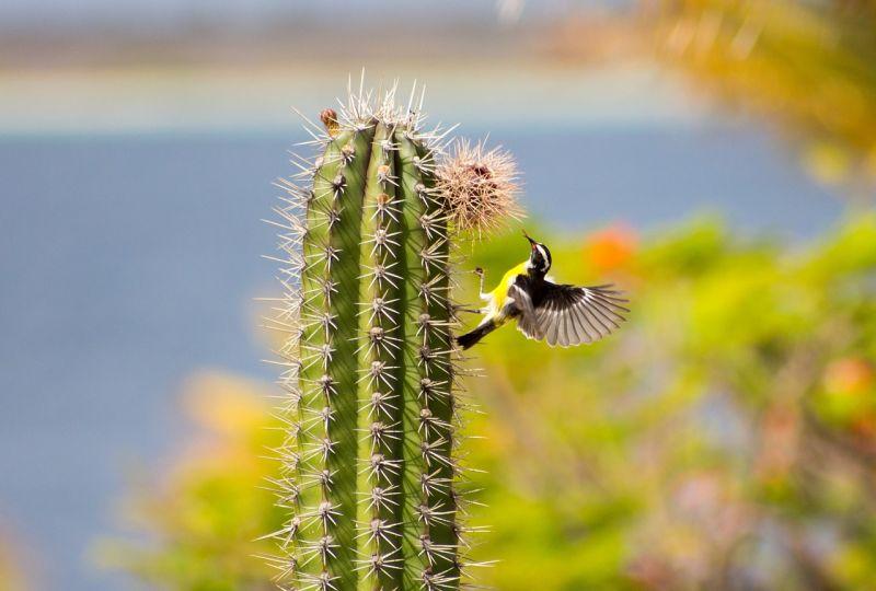 Cactus Características, tipos, cuidados, beneficios, propiedades Planta