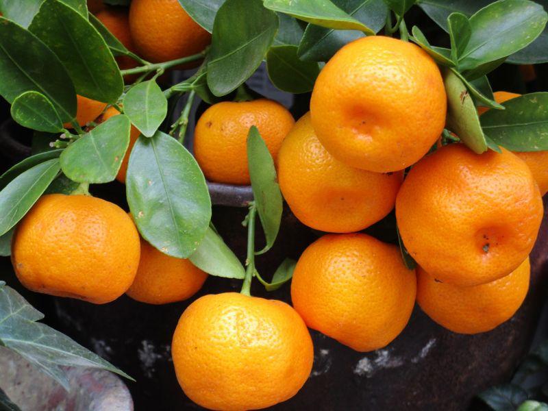 Mandarina Características, beneficios, propiedades, usos Fruta
