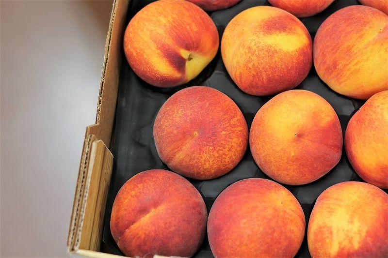 Melocotonero Características, cultivo, reproducción, fruta Árbol