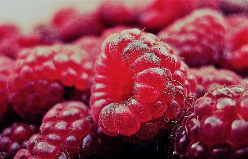Frambuesa Características, variedades, beneficios y propiedades Fruta