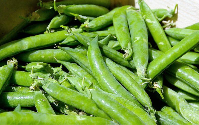 Guisantes Características, beneficios, propiedades, nutrientes Planta