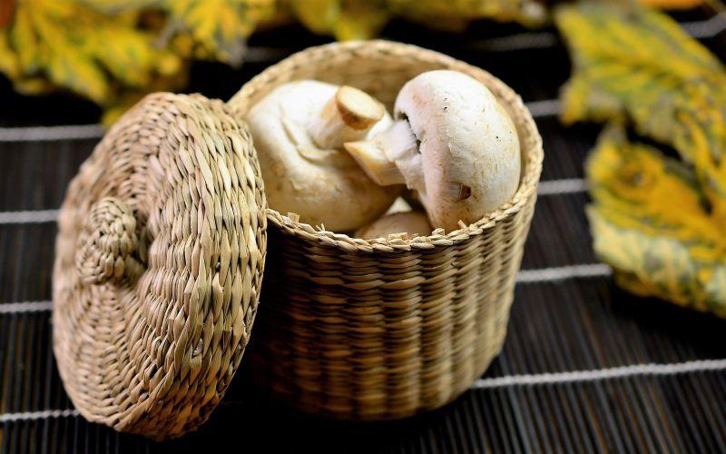 Champiñón Características, cultivo, propiedades, beneficios Hongo
