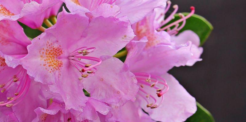 Arbustos Con Flores Listado Tipos Resistentes Al Frio - Arbustos-de-flor