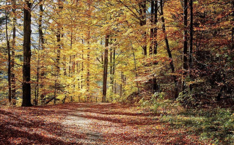 Caducifolio Definición, qué es, bosque, selva, ventajas y desventajas