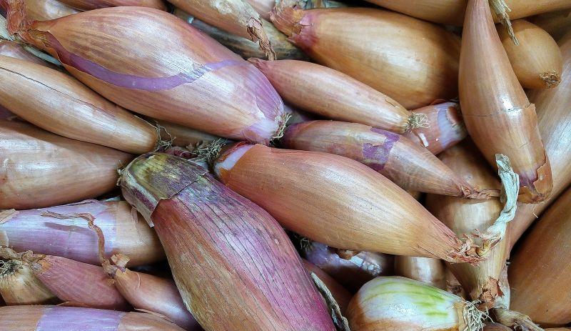 Chalota Qué es, características, usos, cultivo, en la gastronomía Planta