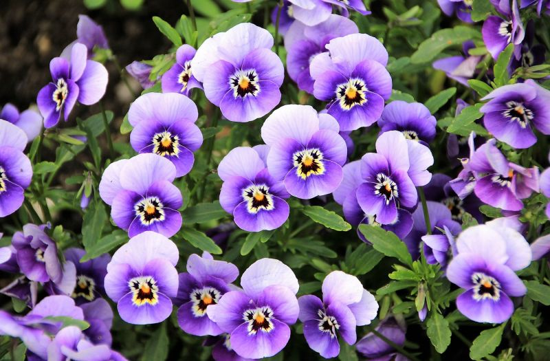 Flores Caracteristicas Tipos Variedades Clases Cuidados