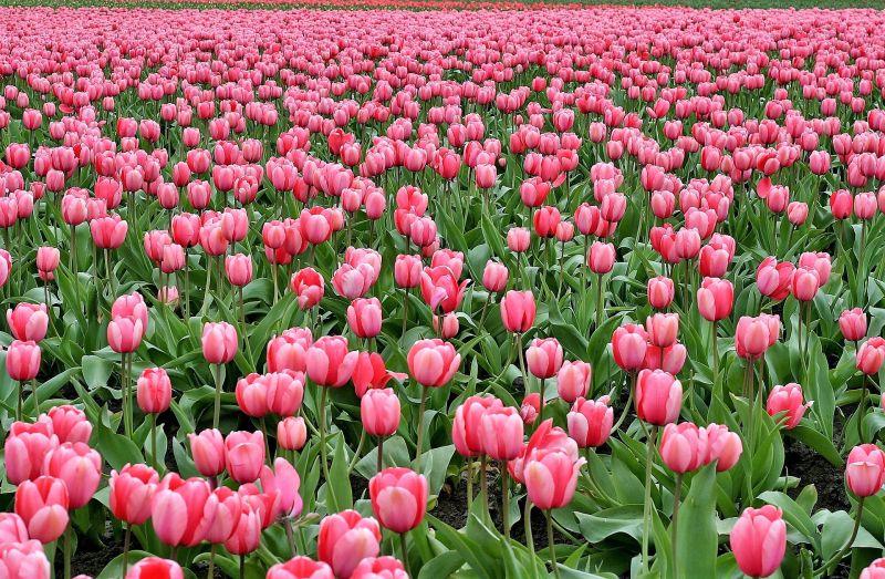 Flores Caracter Sticas Tipos Variedades Clases