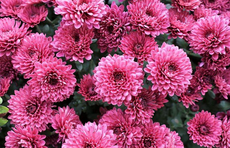Plantas De Exterior Para Todo El Ano Resistentes Al Sol Y Al Frio - Plantas-exterior-resistentes
