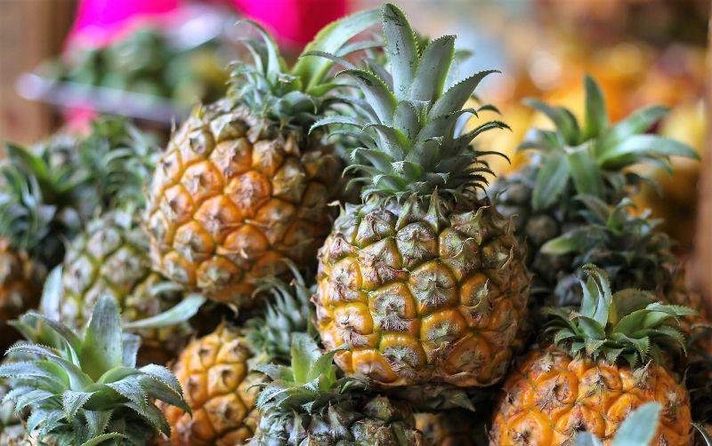 Piña Qué es, descripción, características, fruto, cultivo, producción