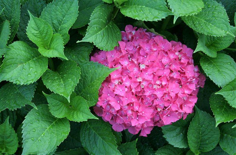 Plantas de exterior Para todo el año, resistentes al sol y al frio