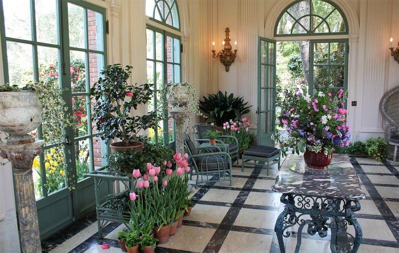 Plantas De Interior Grandes Pequeñas Con Y Sin Flor Cuidados