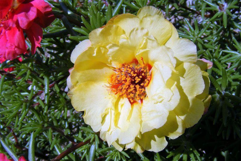 Plantas de jardín Listado, nuestras favoritas, cuidados, jardines verticales