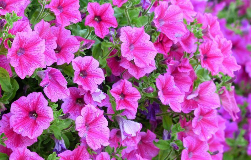 Plantas de jard n listado nuestras favoritas cuidados for Plantas decorativas para jardin