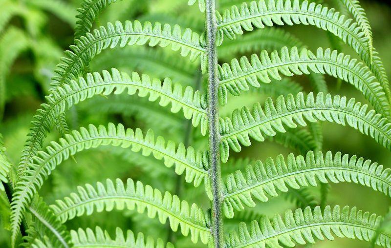 Plantas de sombra Variedades, especies, cuidados, para todo el año