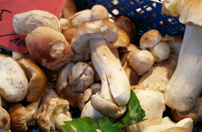 Boletus Edulis Características, hábitat, cultivo, usos Seta, hongo