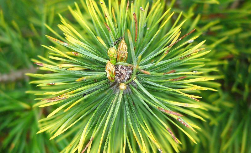 Bosque de coníferas Qué es, características, flora, información, tipos