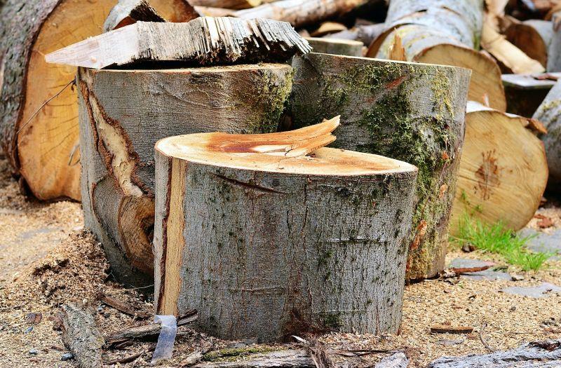 Tala de árboles Qué es, información, causas, consecuencias, actualidad