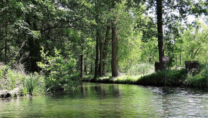 Biorremediación Qué es, tipos, ventajas y desventajas Aguas y suelos