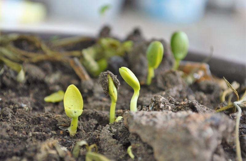 Compost orgánico Qué es, para qué sirve, elaboración, beneficios, abono
