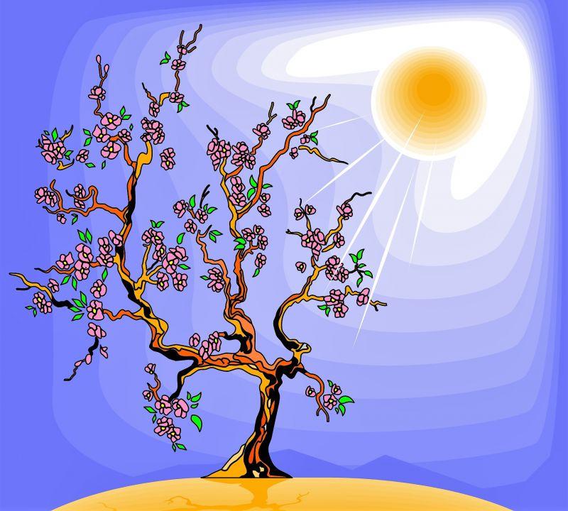 Fotosíntesis Qué es, cómo se realiza, proceso, importancia, fases, etapas