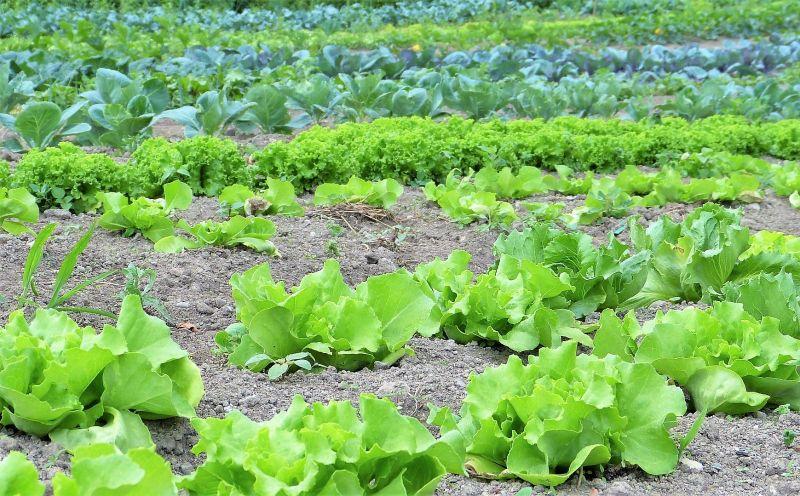 Herbicida Qué es, definición, tipos, para qué sirve, información, efectos