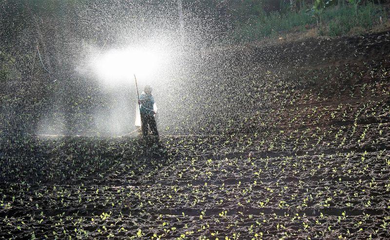 Fertilizantes Qué son, usos, clasificación, orgánicos, químicos Plantas