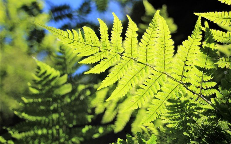 Plantas vasculares Qué son, tejidos, organos, sistema de circulación