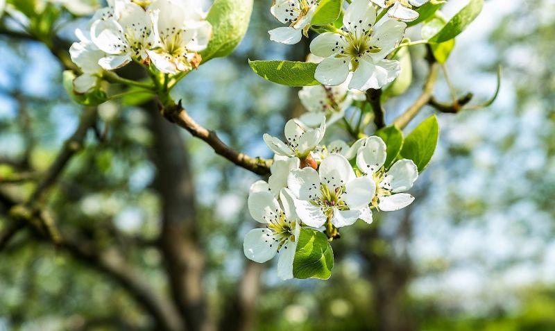 Árboles con flores Características, uso, importancia, destacados