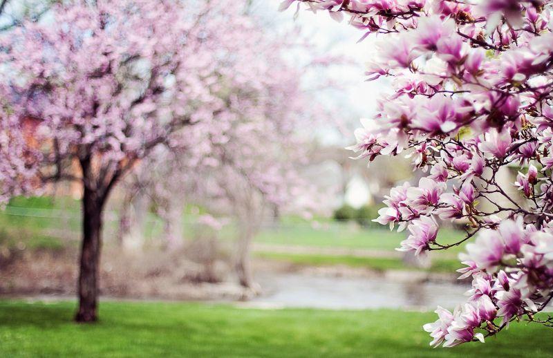 Árboles con flores