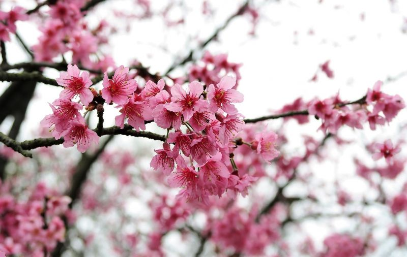 Los árboles con flores