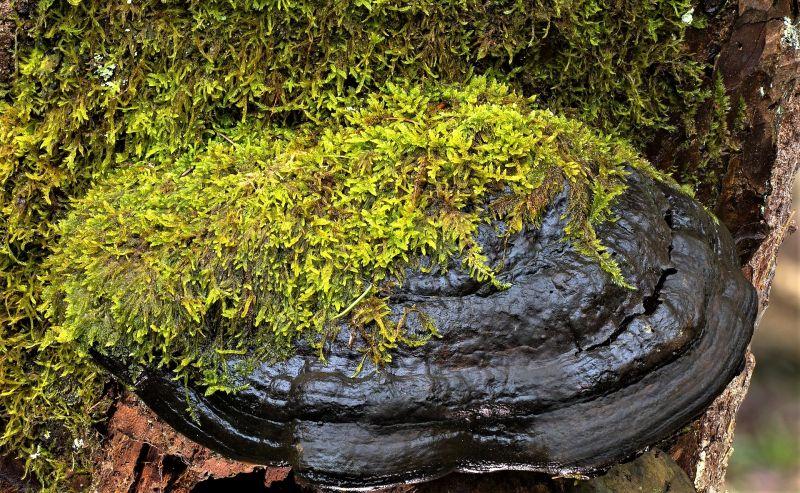 Briofitas Características, reproducción, hábitat, clasificación, color Planta