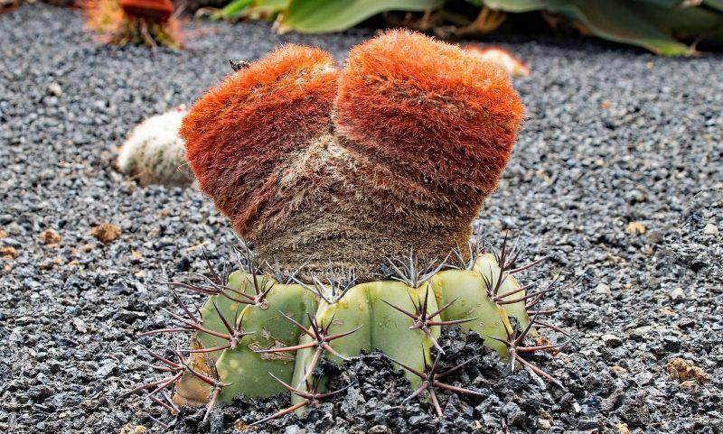 Fanerógamas Características, hábitat, reproducción, importancia Plantas